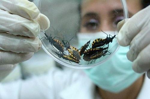 Vigilância Ambiental realiza orientação sobre Doença de Chagas