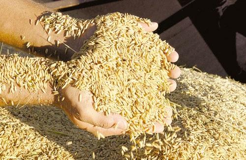 Brasil vai importar arroz dos Estados Unidos e da Tailândia