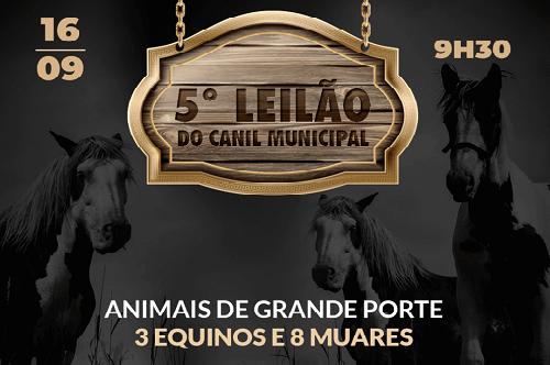 Canil Municipal realizará o 5° Leilão de Animais