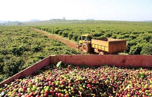 Exportações de café superam calçado pela primeira vez na história em Franca