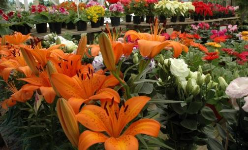 Produtores cobram reabertura de floriculturas na semana que antecede Dia das Mães