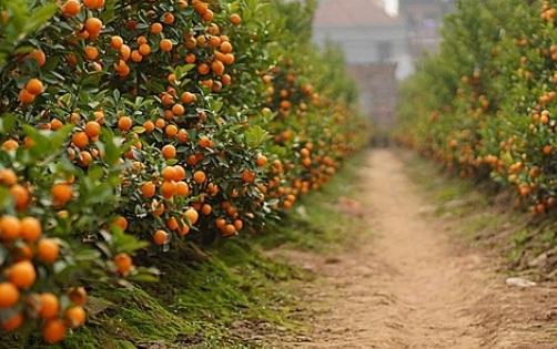 Safra de laranjas registra aumento de 35% no Estado de São Paulo