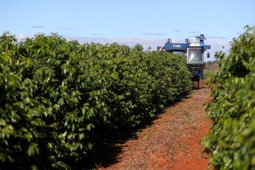 Agronegócio:  Café registra alta no fim de semana
