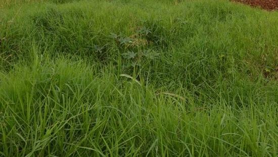 Donos de 530 terrenos sujos já foram notificados neste ano em Franca