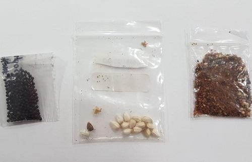 'Sementes misteriosas' têm fungos, bactérias e ácaros, diz Ministério da Agricultura