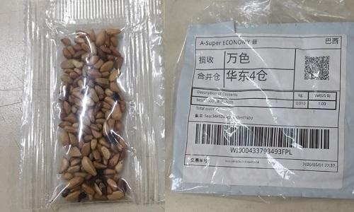 'Sementes misteriosas': Ministério da Agricultura confirma 199 pacotes em 23 estados