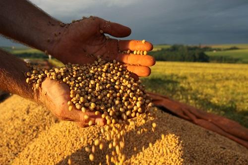 Conab estima recorde da produção de grãos no país: 250,5 milhões de toneladas